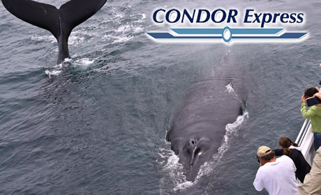 Condor Express Whale Watching